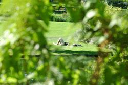 limoges_jardins